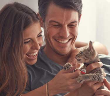 Pet Health Insurance That S Right For Your Cat 24petwatch